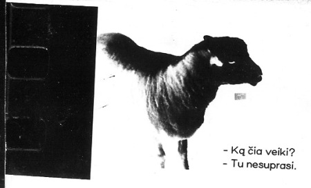 juoda avis is kino juostospozityvo
