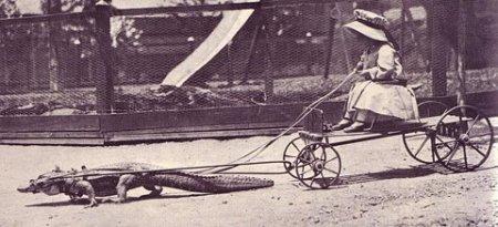 krokodilas ir mergaitė