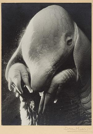 """Dora Maar. """"Ubu"""", 1936"""